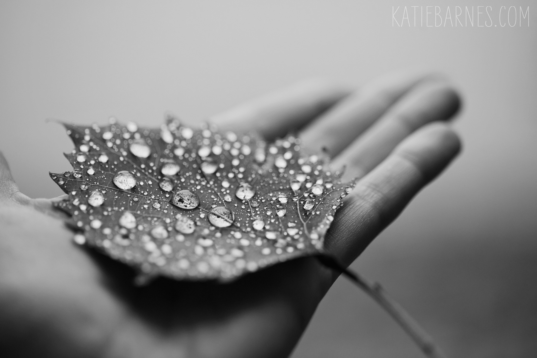 20140909-leaf-droplets