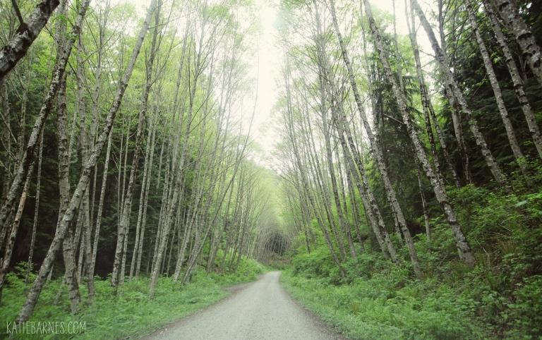 bellingham-chuckanut-forest-road