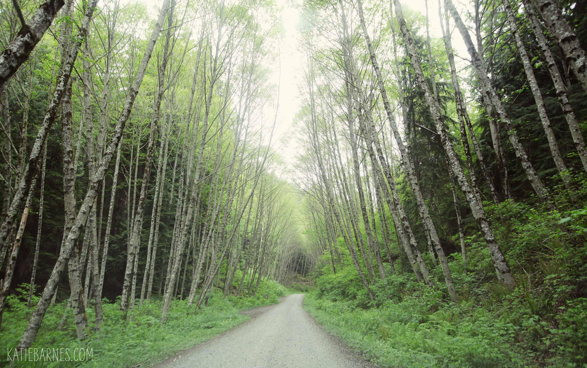 bellingham-chuckanut-forest-road