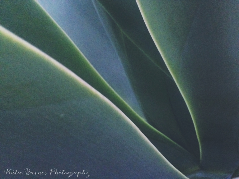Fine art abstract photo of agave century plant leaves in Venice, CA.